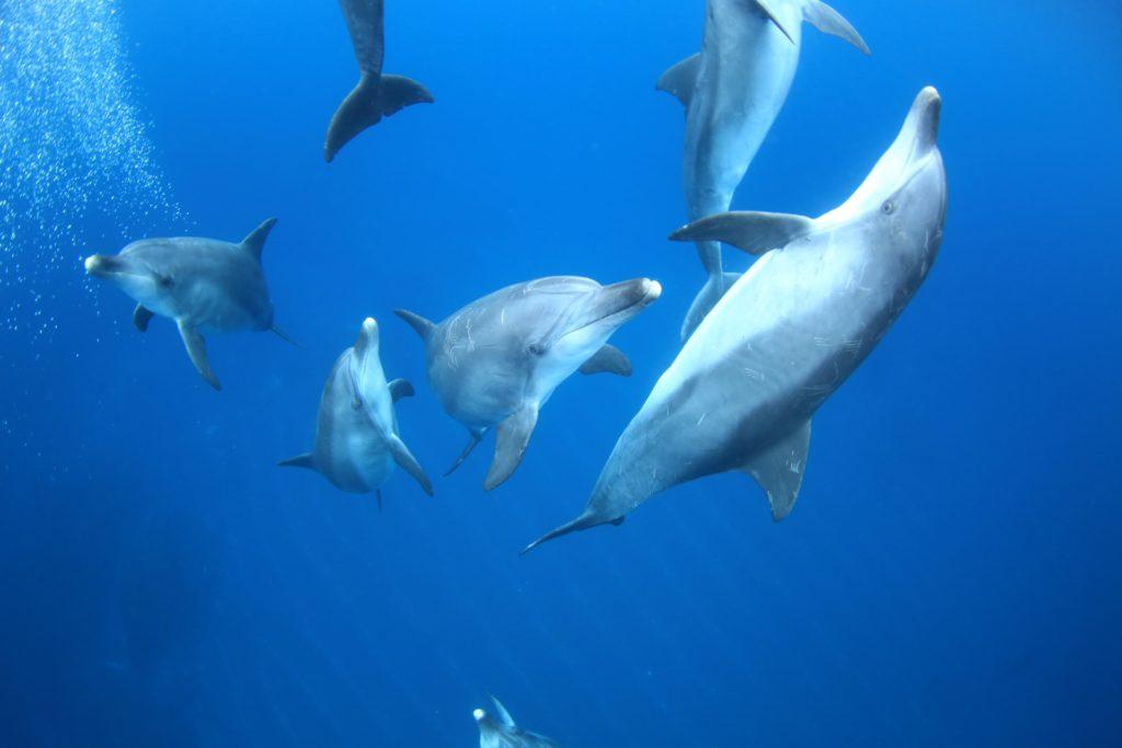 イルカの群れの写真