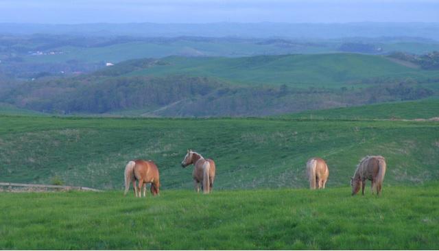 馬プラセンタと豚プラセンタの比較